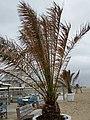 Zandvoort, Beach - panoramio (1).jpg