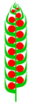 Zapfen (inflorescence).PNG