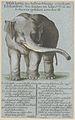 Zentralbibliothek Zürich - Abbildung des betrachtungswürdigen Elefanten wie solcher im Jahr 1773 in der Schweiz gesehen worden ist - 000004891.jpg