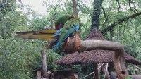File:Zoo de La Fleche 20180601 1.webm