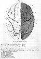 """""""Die Himwindungen des Menschen"""", 1869 Wellcome L0001035.jpg"""
