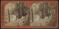 'Congress Park Ramble', by William H. Sipperly.png