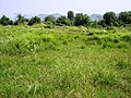 (By @ibnAzhar)-2000 Yr Old Sirkup Remains-Taxila-Pakistan (24).JPG