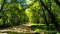 Σπερχειός ποταμός4.jpg