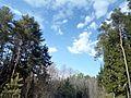 Весеннее небо - panoramio.jpg