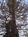Гази Баба - дрво (23).JPG