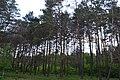 Ділянка лісу між селами Смородине — Кам'янка.jpg
