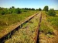 Забута залізниця - panoramio - EugeneLoza (2).jpg