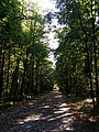 Лесная дорога к Бутовскому полигону.jpg