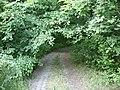 Лісова стежка в заказнику Пашене.jpg