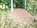 Муравейник в лесу близ Алшихово.JPG