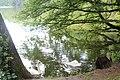 Озеро в Тростянецком парке.JPG