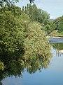 Приобаље ријеке Врбас у градском подручју 05.JPG