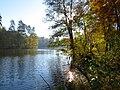 Пуща-Водиця. Осінь. IMG 1121.jpg