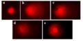 Ранжирование ДНК-комет.png