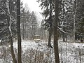 Сиворицы в снегу41.jpg