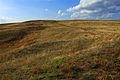 Урочище Утиная гора 9 - panoramio.jpg