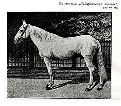 Фото к статье «Кабардинская лошадь». Военная энциклопедия Сытина (Санкт-Петербург, 1911-1915).jpg