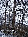 Чернечий Ліс 26.jpg