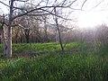 بهار 86 - panoramio.jpg