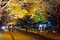 北海道大学(Hokkaido University) - panoramio (8).jpg
