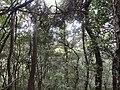 """咸宁""""一级保护""""之原生态孝子山正在面临破坏 - panoramio (8).jpg"""