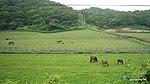 新冠の牧場 - panoramio (1).jpg