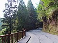 杉林溪林道 Shanlinxi Forest Road - panoramio.jpg