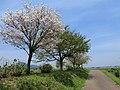 梵天の湯周辺 2012年5月 - panoramio.jpg