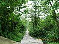 电视发射台下山的台阶路 - panoramio.jpg