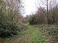 -2018-12-06 Footpath, Pigney Woods, Knapton, Norfolk (5).JPG