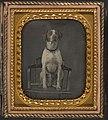 -Dog Posing for Portrait in Photographer's Studio Chair- MET DP120344.jpg