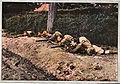 1914 Infanterie écossaise.jpg