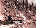 1939. Log truck loaded with burned logs. Meehan operation. Tillamook Burn, Oregon. (34888149091).jpg