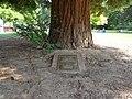 1989 memorial Sequoia sempervirens 02.jpg