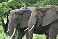 20090507-TZ-NGO Safari 340 (4677394943).jpg
