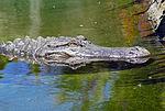 2012-06-09 Oakland Zoo 047 (7439945822).jpg