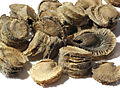 2012-12-10 22-25-52-Alcea-rosea-graines-46f.jpg