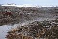2014-04-28 13-22-17 Iceland Norðurland Eystra - Reykjahlíð.JPG