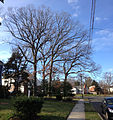 2014-12-30 13 39 15 White Oaks on Cleardale Avenue in Ewing, New Jersey.JPG