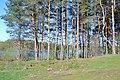 2015 19 Национальный парк Мещёрский - озеро Сокорево.jpg