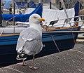 2016.07.16.-04-Hafen Kiel--Silbermoewe.jpg