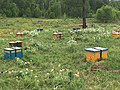 2017. We stopped and asked directions at the camp of some nomadic beekeepers. They had set their hives in flowery meadows. Bulgan Province, Mongolia. (39552582982).jpg