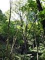 20180522195DR Dohna Naturschutzgebiet Spargrund.jpg
