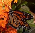 2019-04-15 13-03-56 jardin-papillons-hunawihr.jpg