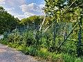 2019-09-19 (140) Wiener Stadtwanderweg 1 - Wire ropes of Sender Kahlenberg, Vienna, Austria.jpg
