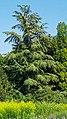 2020-08-09 Isar München nach der Flut 122.jpg