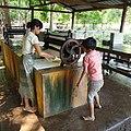 20200208 110715 Rubber plantation Bago Division, Myanmar anagoria.jpg
