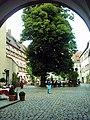 210704 regensburg-biergarten-bischofshof 1-480x640.jpg