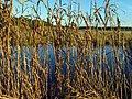 36 Bennetts Point RD Green Pond SC 6864 (12397837123).jpg
